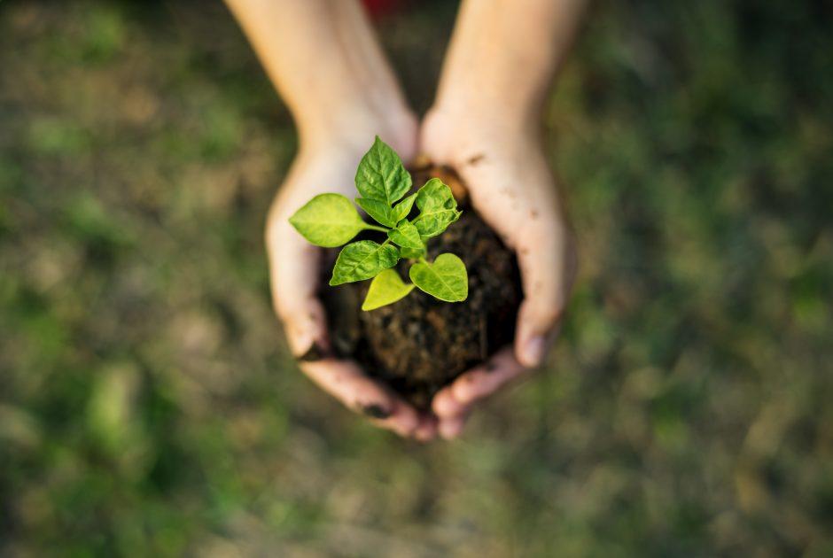 ESMA veröffentlicht konkretere Vorgaben für Nachhaltigkeitsaspekte im Rahmen der AIFMD und der UCITS-Richtlinie.